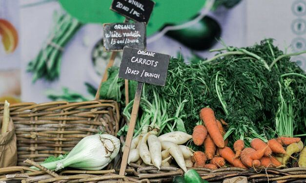 Food and Health – What is the Difference Between Organic and All-natural?