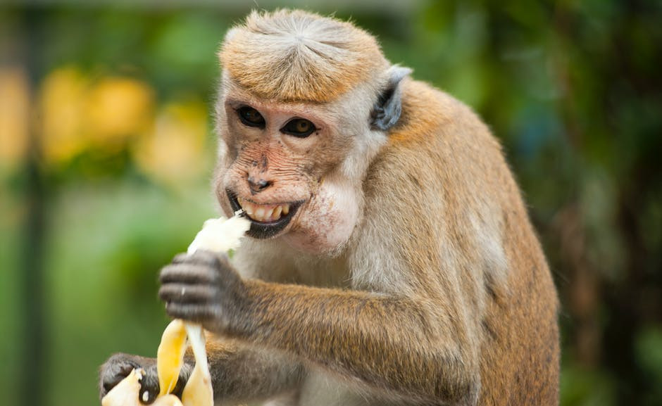 Banana and High Blood Pressure – Is Banana Good for High Blood Pressure?