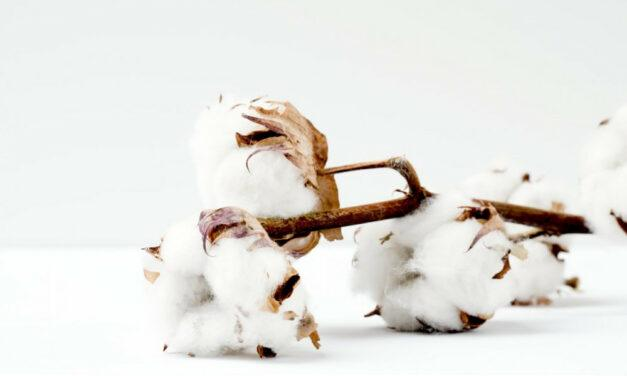 Is Giza Cotton Good for Diabetics?