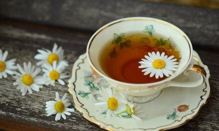 Is Wild Chamomile Flowers Good for Diabetes and High Blood Pressure?