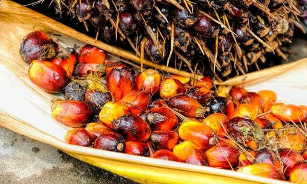 Palm Oil and Diabetes – Is Palm Oil Good for Diabetics?