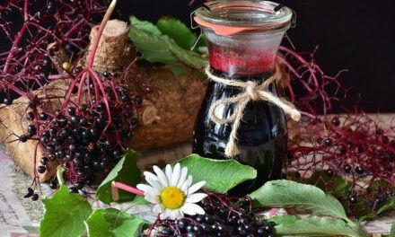 Diabetes And Elderberry Syrup – Can Diabetics Take Elderberry Syrup?